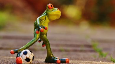 https://pixabay.com/en/frog-football-funny-cute-play-1175599/