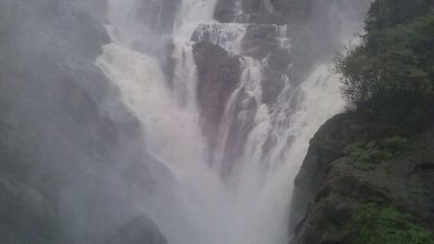 Wikipedia -Dudhsagar waterfalls
