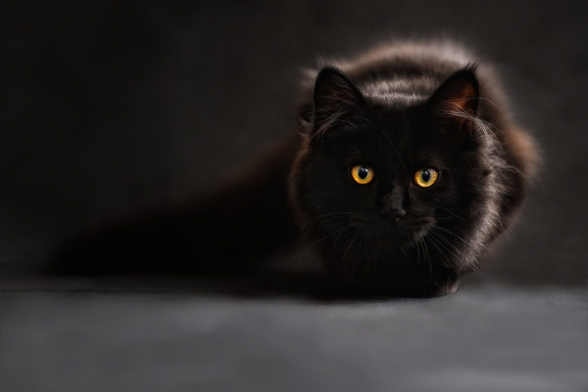 superstitions https://pixabay.com/en/cat-silhouette-cats-silhouette-694730/