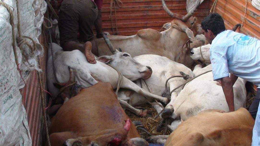ban on sale of cattle for slaughter to be lifted