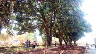 Goencho Avaaz protect Mango Trees outside Colvale