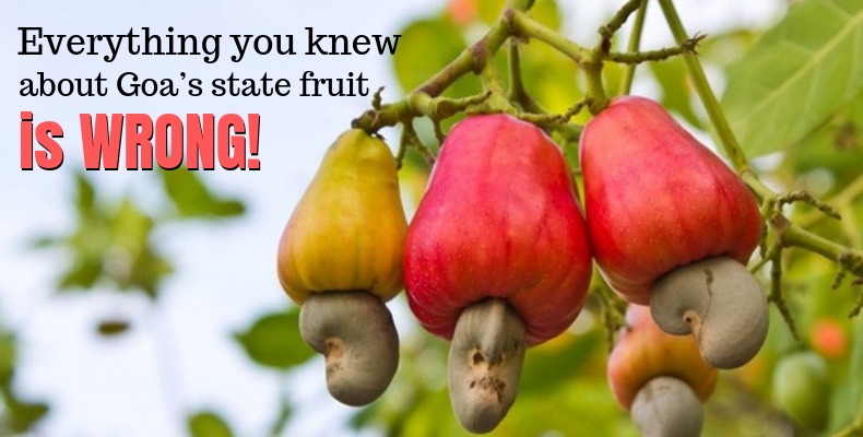 Cashew Fruit is State Fruit of Goa